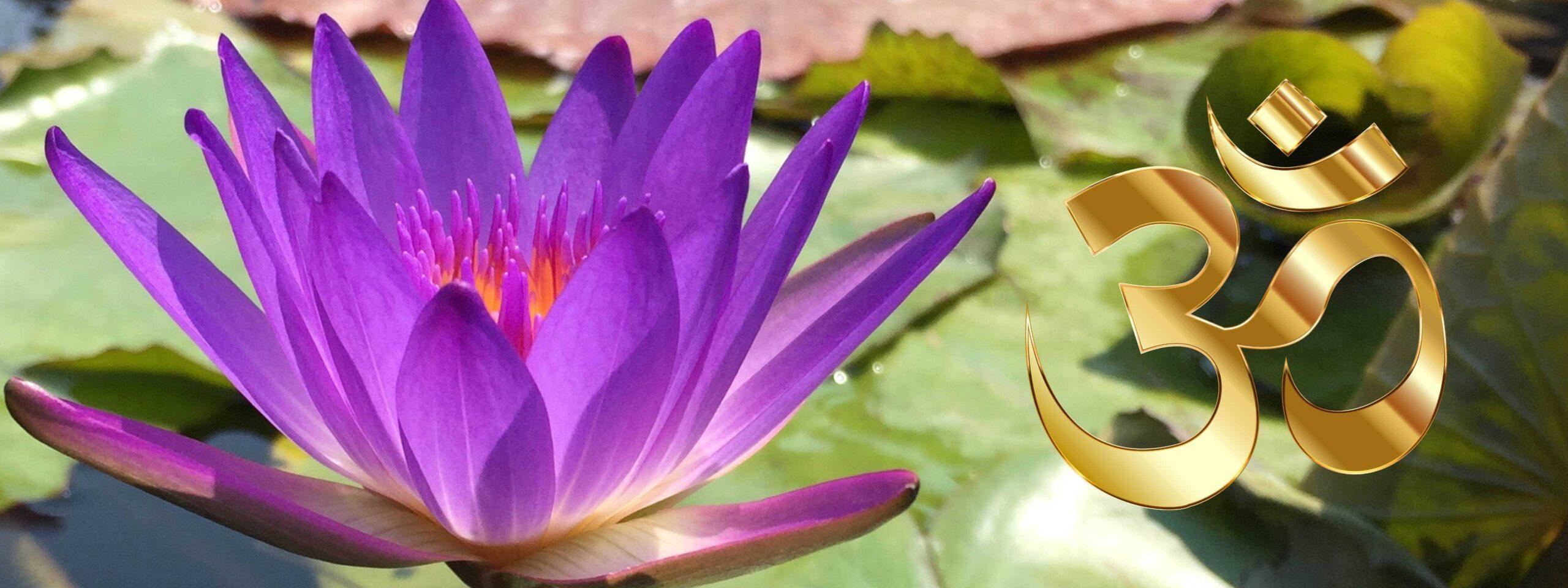 Violette Lotusblume neben pinken OM