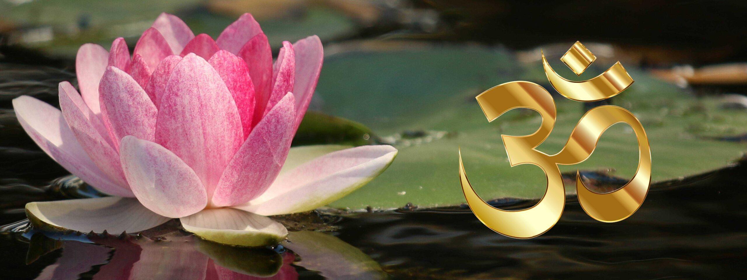 Rosa Lotusbleme neben einem goldenen OM
